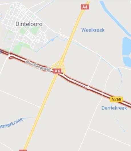 Niet nog meer kassen in Steenbergen: 'Het is gewoon gestoord'