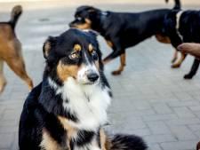 Dierenopvang leeg door vuurwerkverbod en thuisblijvers: 'Komt letterlijk en figuurlijk geen hond dit jaar'