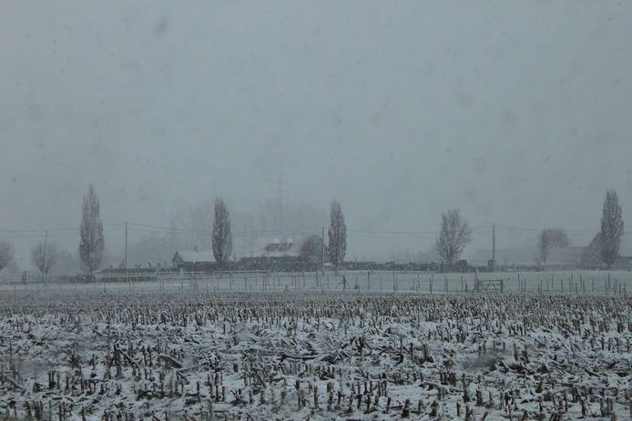 Een dun laagje sneeuw bedekt de akkers in Izegem