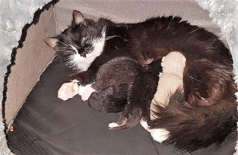 Filoe en de kittens, toen ze nog kleiner waren.