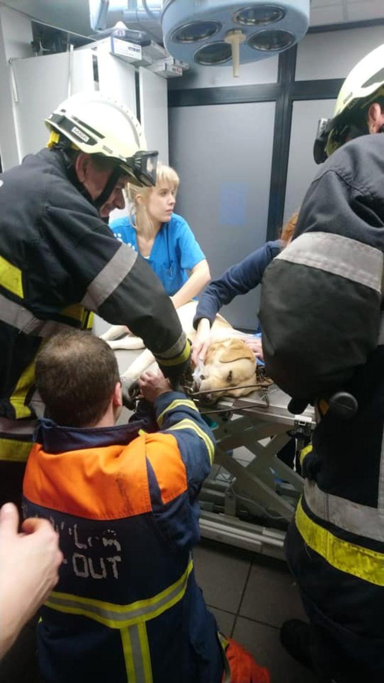 Tommy overleefde het dankzij de brandweer en de dierenarts.