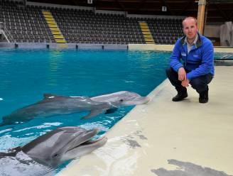 """Directie Boudewijn Seapark reageert verrast op uitspraken Weyts: """"Dolfijnen krijgen perfecte verzorging"""""""