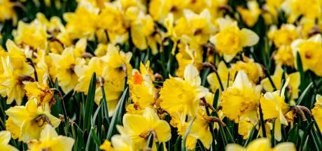 Storm Dennis: code geel maar ook warmterecord in De Bilt én de eerste lentedag van 2020
