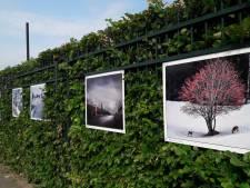 Fotobiënnale zoekt voor het eerst centrum van Haaksbergen op