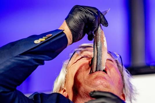 Een keurmeester keurt haringen op de Visafslag voorafgaand aan de veiling van het eerste vaatje Hollandse Nieuwe, de traditionele start van het haringseizoen.