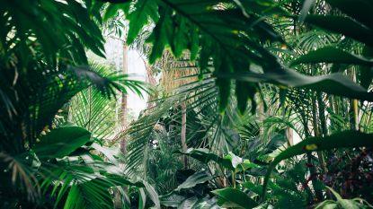Mag je niet gemist hebben deze week: scoor planten aan spotprijsjes & zo maak je thuis ijskoffie