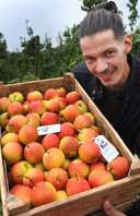 Fruitteler Albert van Os uit Waardenburg