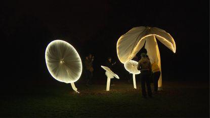 VIDEO. Prachtig verlicht 's avonds: de plantentuin van Meise