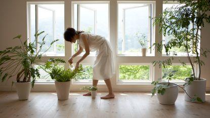 Geen tuin? Zo kan je toch tuinieren, in planten en bloembakken