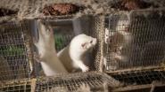 Nertskweker riskeert 2 maanden cel voor dierenmishandeling