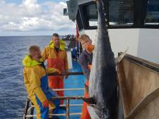 Urker vissers halen bij toeval twee meter lange tonijn uit de Noordzee