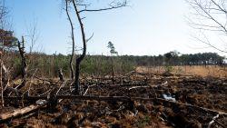 """Code rood in Antwerpse natuurgebieden: """"Extreem hoog gevaar op brand"""""""