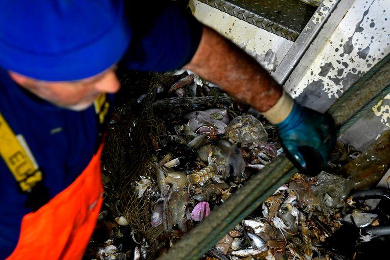 In visser ruimt plastic troep op voor de kust van Italië.