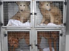 LIVE: Hondenfokker Lettele voor de rechter wegens verwaarlozing
