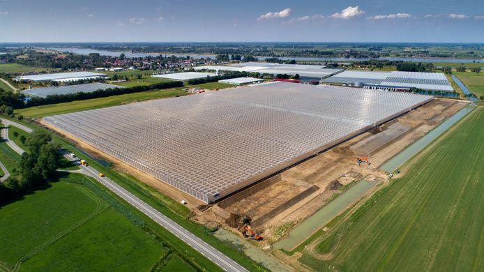 De kas van  Dutch Berries in Zuilichem , die hier nog in aanleg is. Het bedrijf draait  inmiddels ruim een jaar.