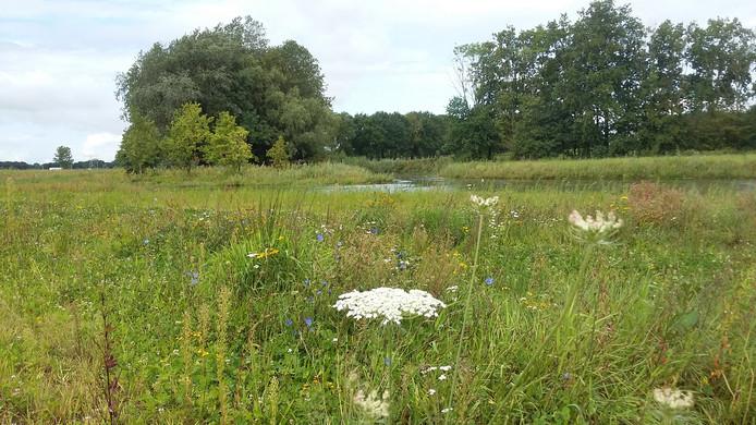 Het dynamisch beekdal bij Middelrode is drassig gebied geworden waar vogels van profiteren.