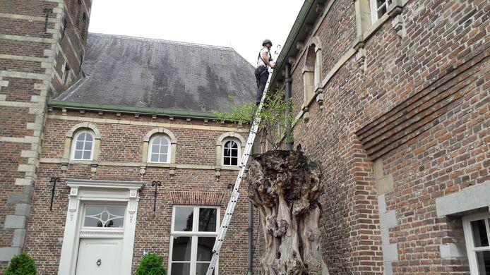 Het bestuurscentrum zit sinds de start van Meierijstad in 2017 al gevestigd in het monumentale Dommelrode in Sint-Oedenrode. Als het aan de politiek ligt, blijven de raadzaal en de griffie hier.