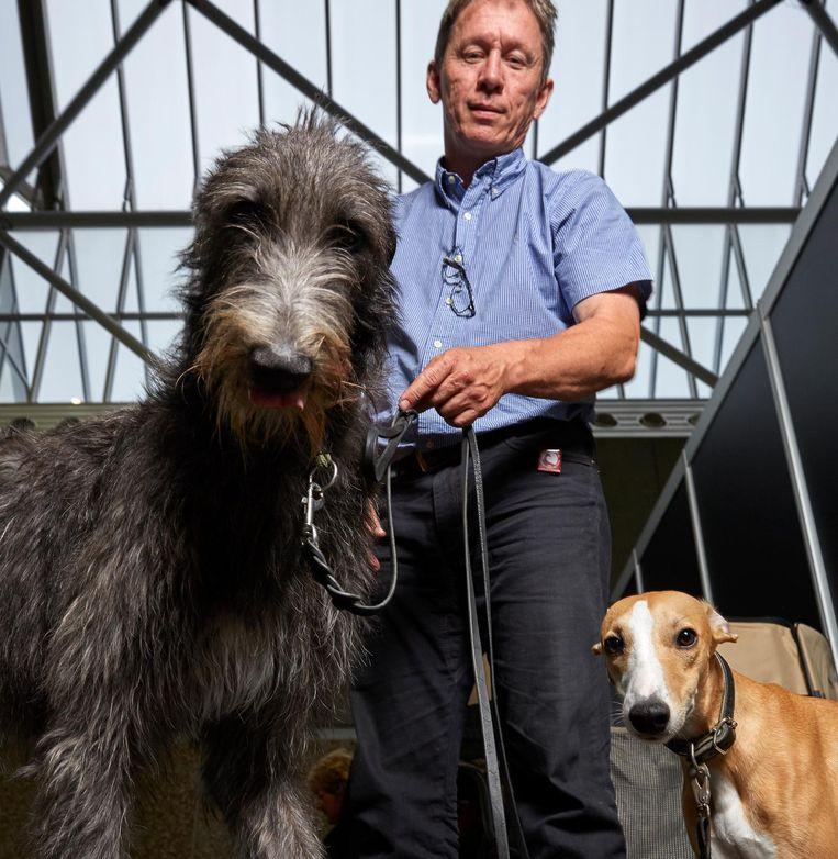 Glorious (4), Scottish deerhound Whippet van Åke Käck uit Zweden, die naar de RAI kwam met zeven windhonden in een camper Beeld Isabella Rozendaal