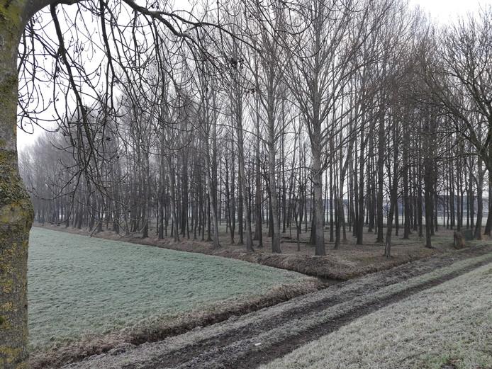 Het populierenbosje langs de Waspiksedijk in Sprang-Capelle is in slechte conditie, mede vanwege stormschade.