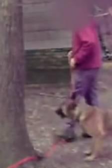 Arrestaties in Elburg en rest van Gelderland voor zware mishandeling van politiehonden tijdens trainingen