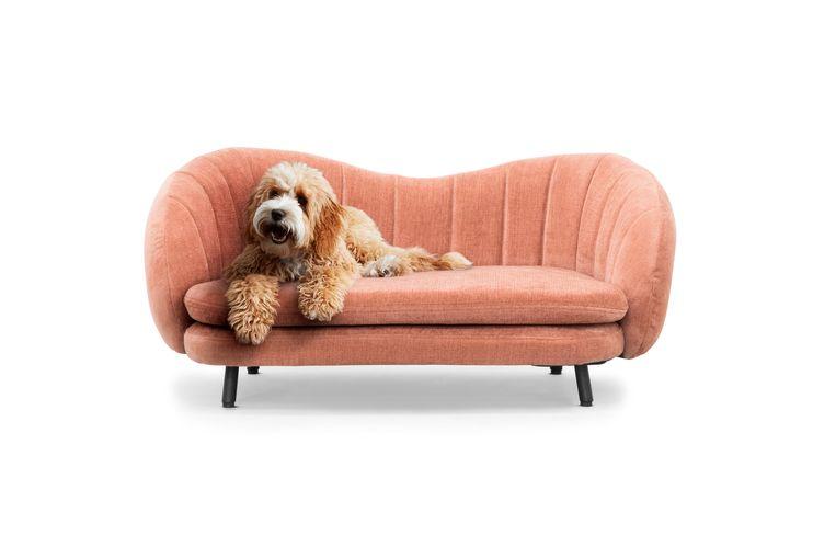 Hondenzetel Sofacompany