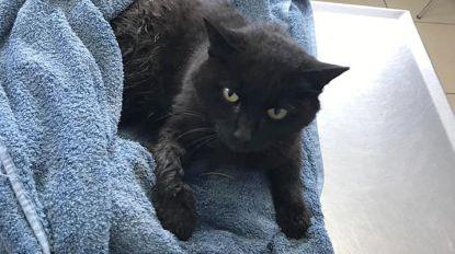 Voorbijgangers redden katje uit klem; poesje wacht bij dierenarts op baasje