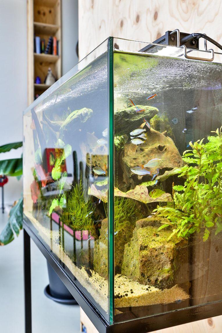 'Het aquarium is van Lex. Ik heb niet zoveel met een aquarium, maar wat Lex leuk vindt, moet ook kunnen in huis. Ik moet eerlijk toegeven dat het toch wel mooi is en dat ik ervan kan genieten om aan tafel naar de vissen te kijken.' Beeld Henny van Belkom