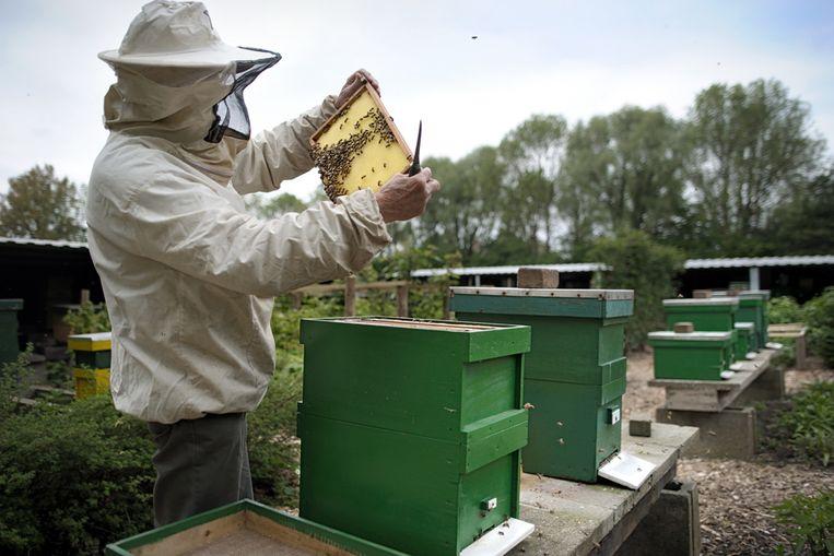 Een imker op het Bijenpark in Nes aan de Amstel monstert zijn bijen. (Joost van den Broek / de Volkskrant) Beeld Joost van den Broek