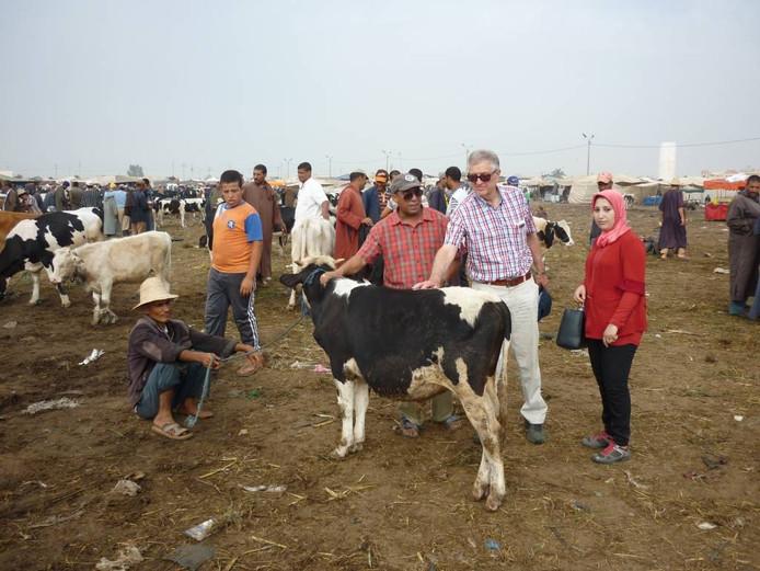 Hink Perdok op een veemarkt in Marokko. Daar adviseerde hij boeren over de melk- en vleesproductie van koeien.