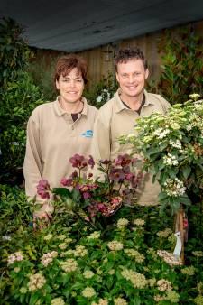 Buxus gaf de aanzet tot een groot groencentrum in Horssen