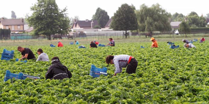 Aardbeienplukkers langs de A58.