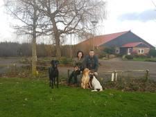 Hier gaan honden van kwijlen. Een pension met snuffelbos en zwemvijver