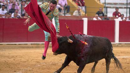 Na twee jaar opnieuw stierengevechten toegelaten op Mallorca
