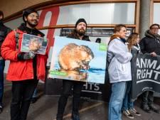 Dierenactivisten demonstreren in Amersfoort tegen 'uitroeiing' muskusratten: 'Honden en katten verdrink je toch ook niet?