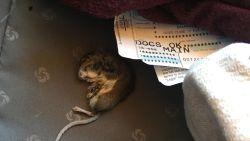 Vrouw vindt dode rat in bagage na vlucht met American Airlines