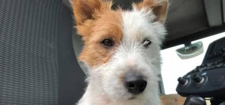 Jogger die hondje Dribbel doodstak is opgepakt na verspreiding van camerabeelden