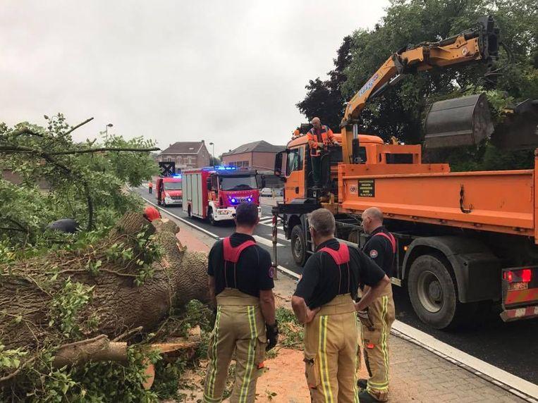 De brandweer van Tienen en de technische dienst van Glabbeek hadden de handen vol om de omgevallen boom van de rijbaan weg te halen.