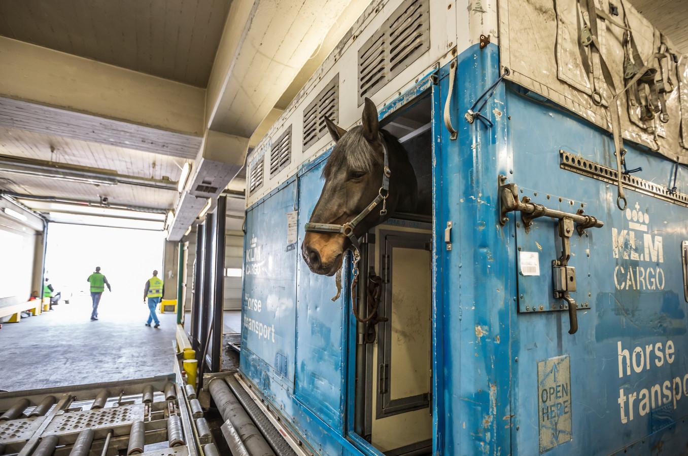 Een paard in een stal bij 'dierenhotel' Schiphol.