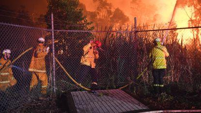 Meer dan 1.000 hectaren in de as gelegd bij bosbrand rond Sydney