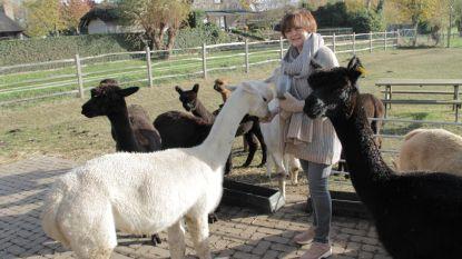 Anja lanceert eigen collectie van alpacawol