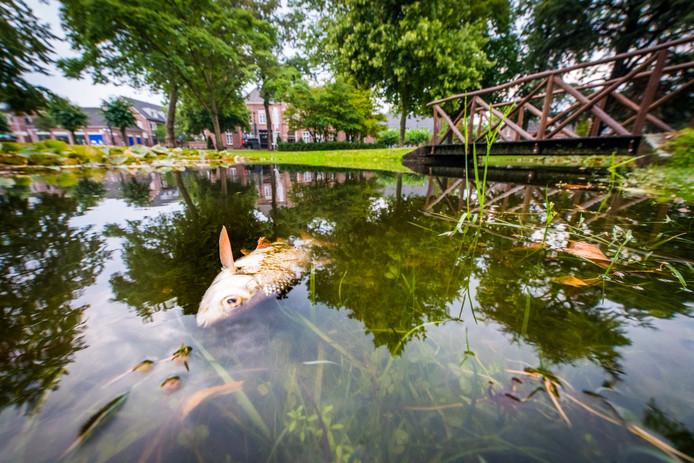 Vissensterfte in de vijver in Nuenen.