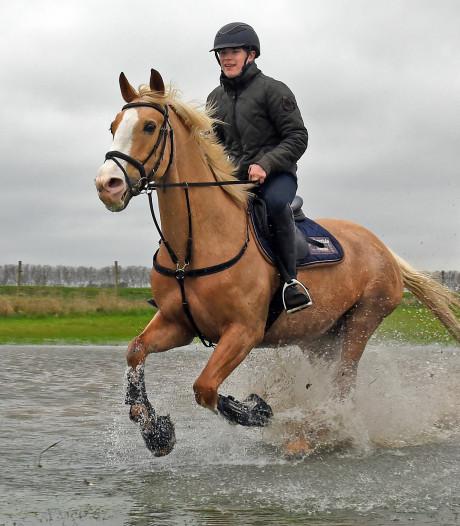 Omgaan met paarden is way of live voor Miguel Broodman