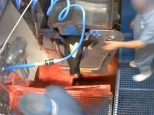 'Ontdaan': Belgische slachterij ligt stil na schokkende video Animal Rights