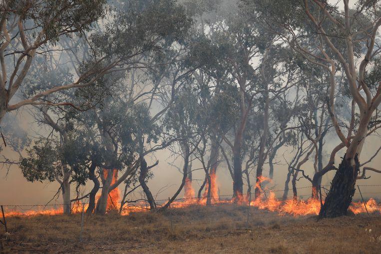 Volgens wetenschappers zullen bosbranden veel vaker voorkomen in de toekomst.