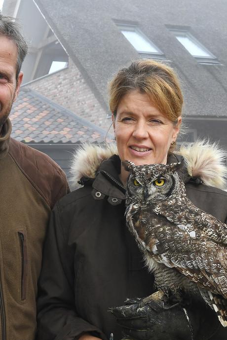 Voor deze roofvogels komen rijke sjeiks naar Langenboom
