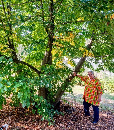 Tilburg hoopt op dé nazaat van oude Heuvelse linde, Spoorpark wil de boom erg graag