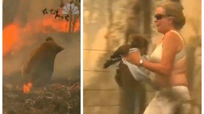 Australische vrouw zet alles op alles en redt zwaar verbrande koala uit vlammenzee