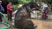 'Gigantische rat' ontdekt in riool Mexico-City