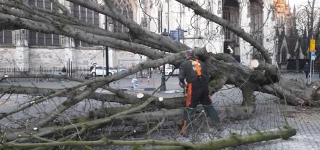 Kastanjeboom valt om op Parade in Den Bosch en is (bijna) weg