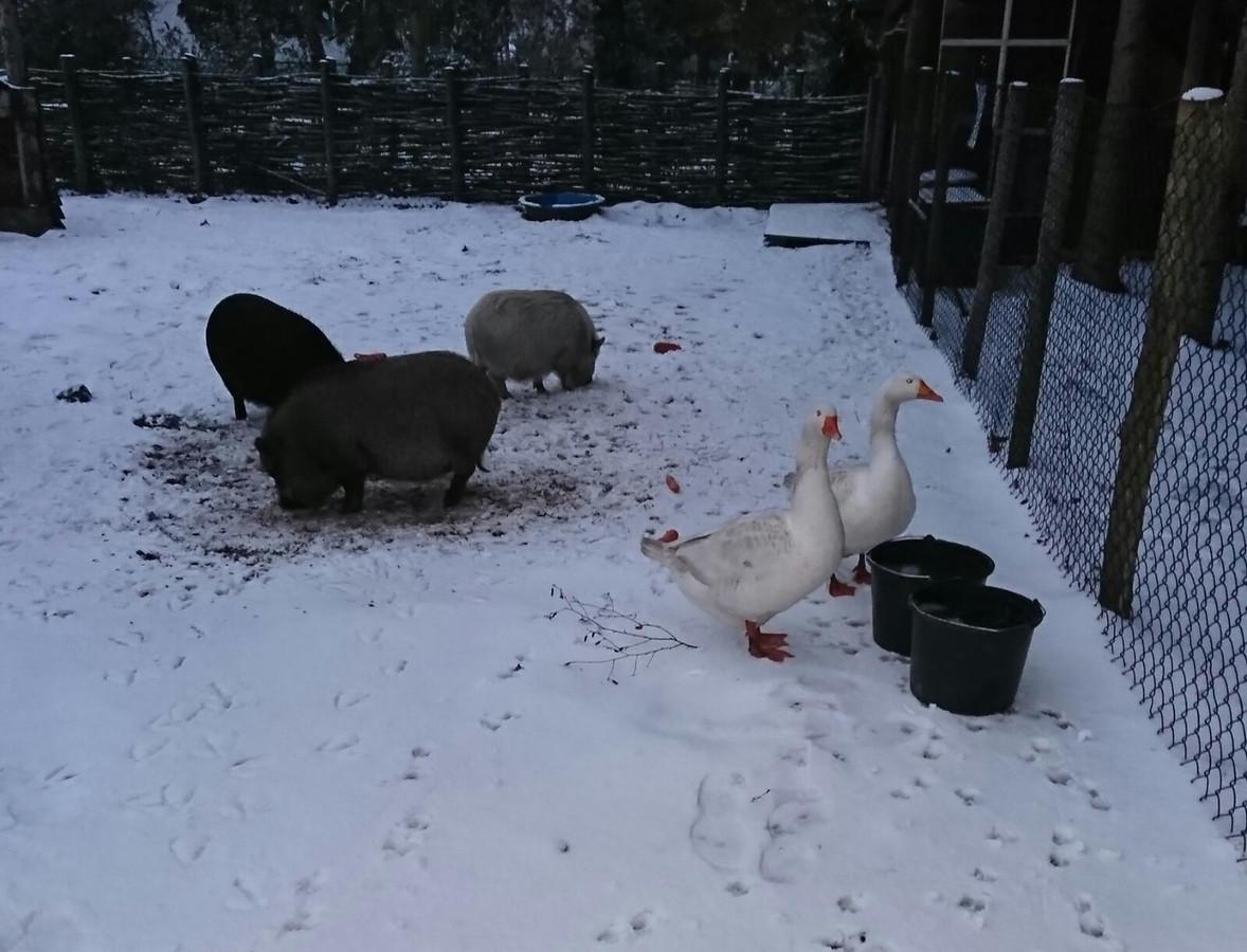 De dieren in het Trollenbos in Nuenen moeten even wennen aan het nieuwe uitzicht.